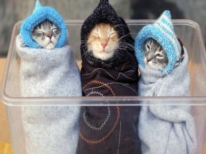 Tres gatitos muy arropados
