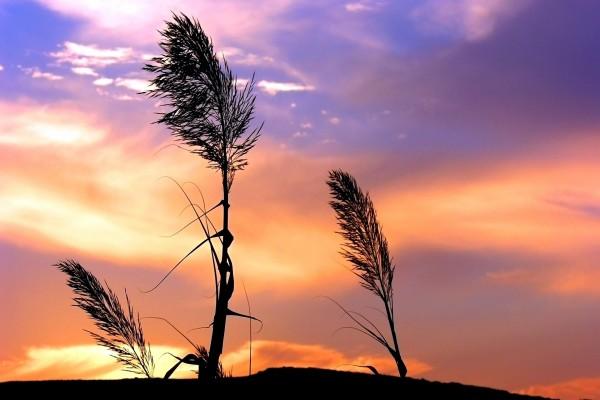 Plantas azotadas por el aire