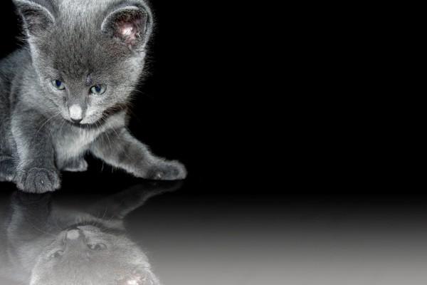 Gatito reflejado en el suelo
