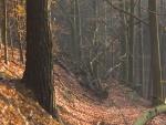 Árbol caído en el suelo