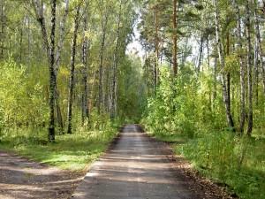 Postal: Camino entre la naturaleza