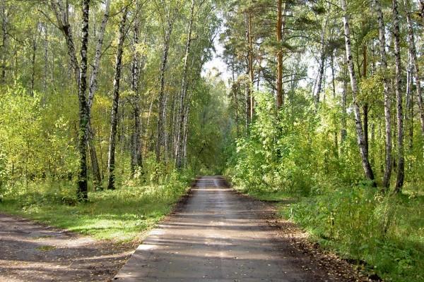 Camino entre la naturaleza