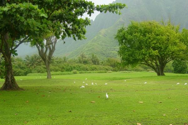 Pradera verde con aves blancas