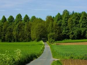 Estrecha carretera hacia la arboleda