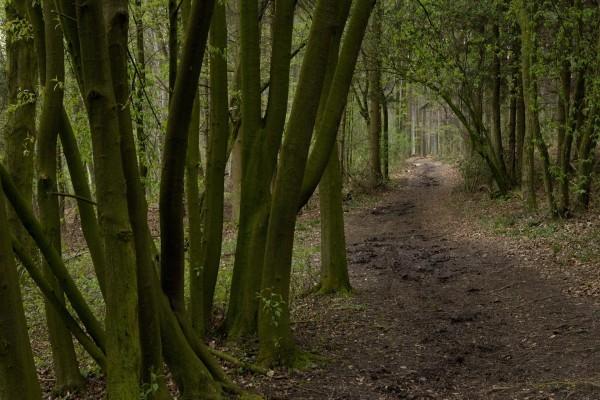 Camino oscuro entre los árboles del bosque
