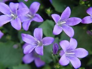 Postal: Flores de color lila