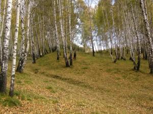 Buscando setas entre los árboles en otoño