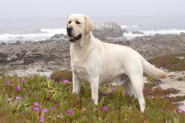Perro pisando las plantas cerca del mar