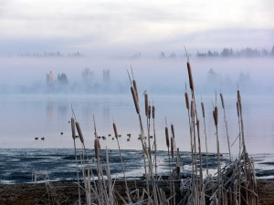 Postal: Bruma en el lago