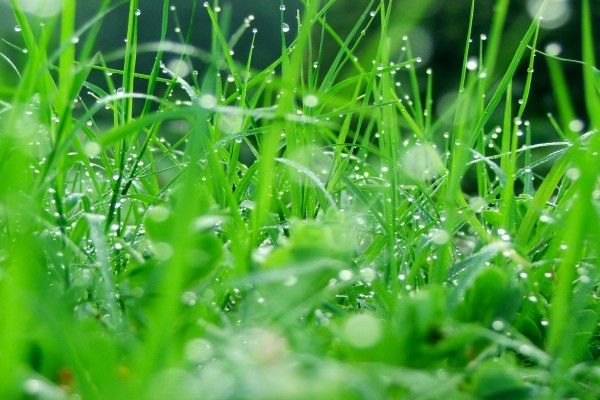 Hierba mojada por la lluvia