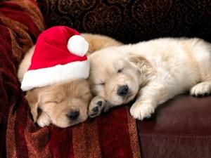 Perros dormidos en Navidad