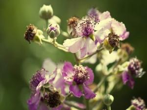 Flores marchitas y florecidas en la misma rama