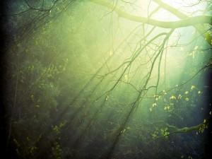 La luz del sol a través de las ramas del árbol
