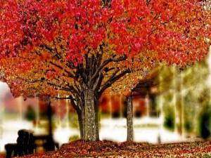 Postal: Árbol en otoño