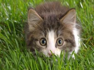 Agazapado en la hierba