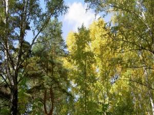 Postal: El sol ilumina las copas de los árboles