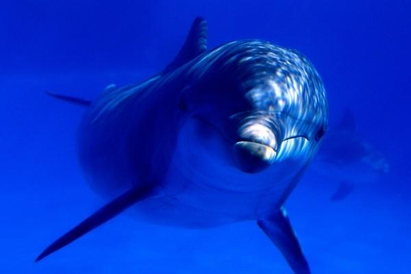 Un delfín visto de cerca