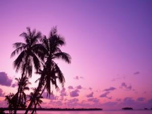 Palmeras y cielo púrpura en una playa