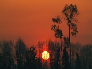 El sol en un cielo naranja