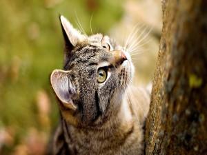 Gato en el árbol