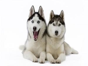 Dos perros graciosos