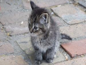 Postal: Gatito perdido en la calle