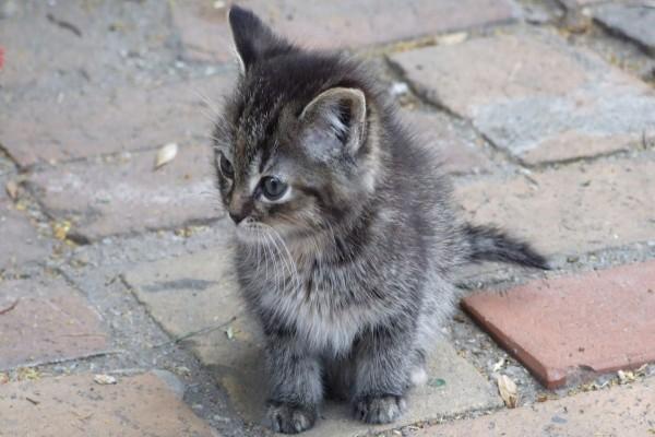Gatito perdido en la calle