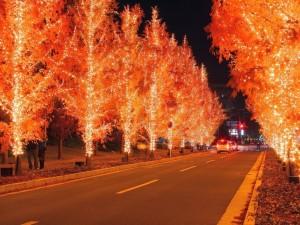 Carretera con árboles iluminados