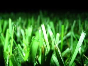 Césped iluminado por la noche