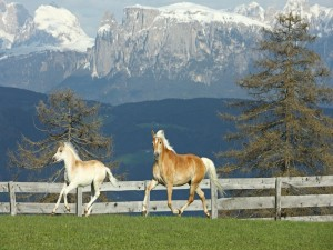 Caballos cerca de las montañas