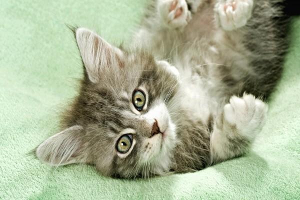 Gatito con los ojos verdes