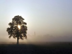 Árbol tapando el sol