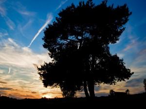Postal: Dos árboles muy juntos
