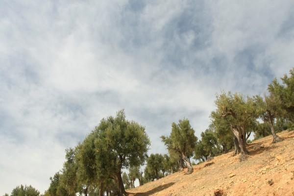 Árboles de secano