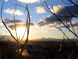 Ramas de árbol tapan al sol