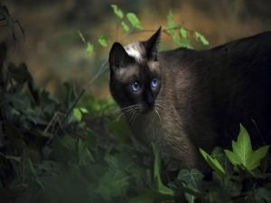 Postal: Gato de ojos azules entre hojas verdes