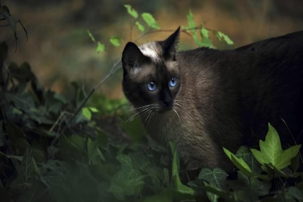 Gato de ojos azules entre hojas verdes