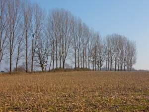 Postal: Árboles a la llegada del invierno