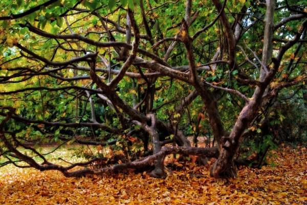 Un árbol mudando sus hojas