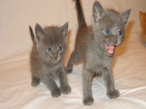 Postal: Gatitos enfadados