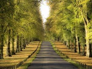 Árboles a los lados de una pequeña carretera