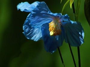 Flor con pétalos azules