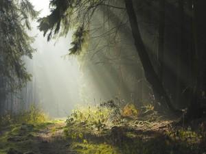 La luz del sol entra en el bosque