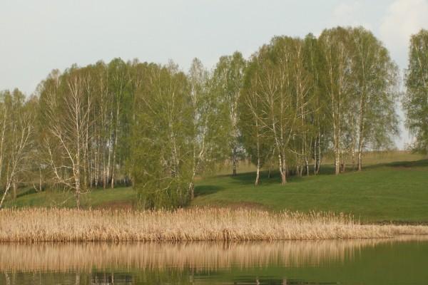 Árboles y hierba cerca del agua