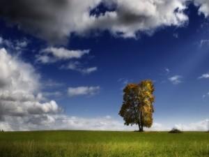 Árbol solitario