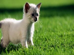Postal: Gatito en el césped verde