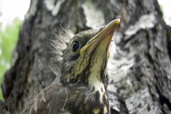 Pico de un pájaro
