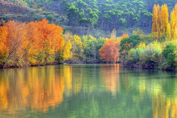 Árboles de colores reflejados en el agua