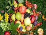 Frutas variadas en la hierba