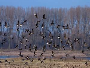 Aves iniciando el vuelo
